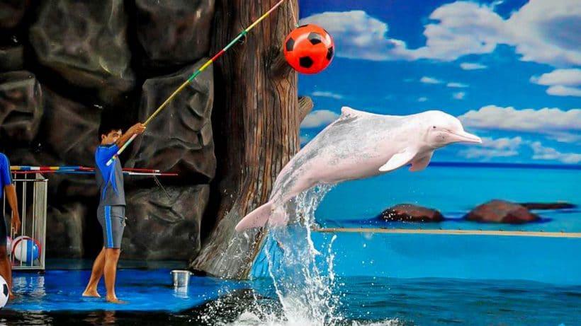 banner-pattaya-dolphin-world