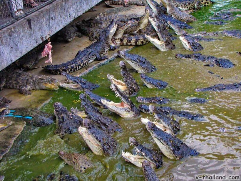 krokodilovaja-ferma-v-pattaje-5