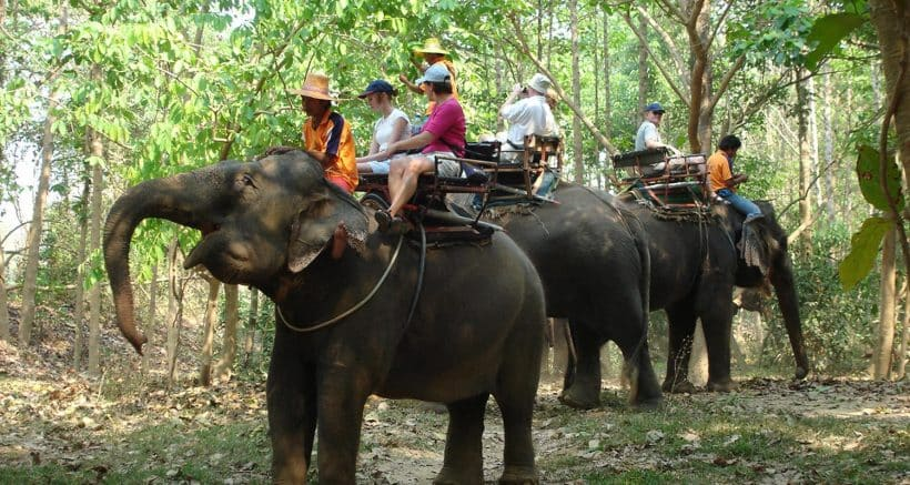 one-hour-elephant-trekking-pattaya-tour-2-2